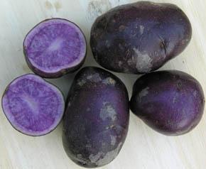 Kartoffel Blå Congo